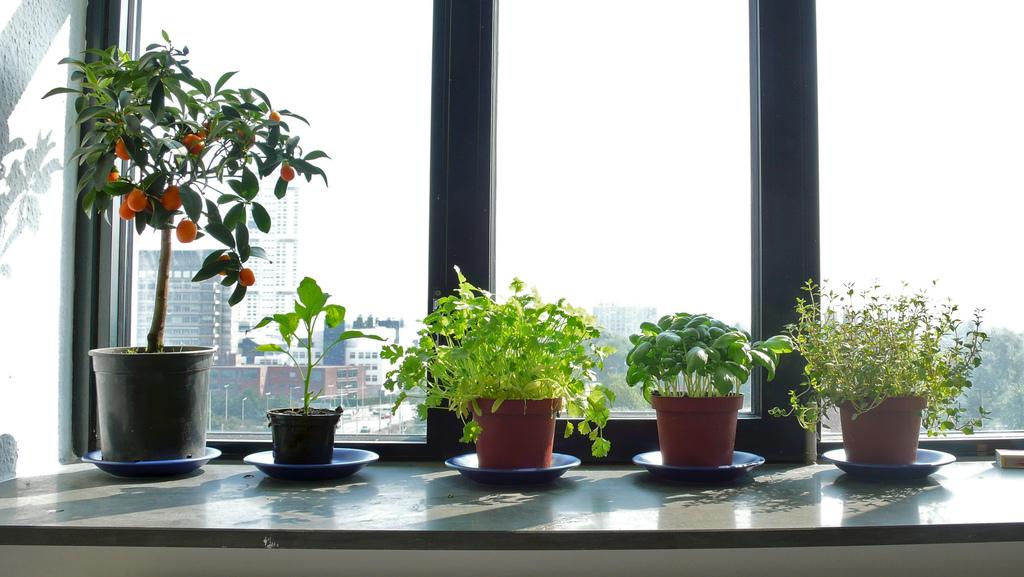 6 Best Indoor Herbs To Grow In Your Garden Window