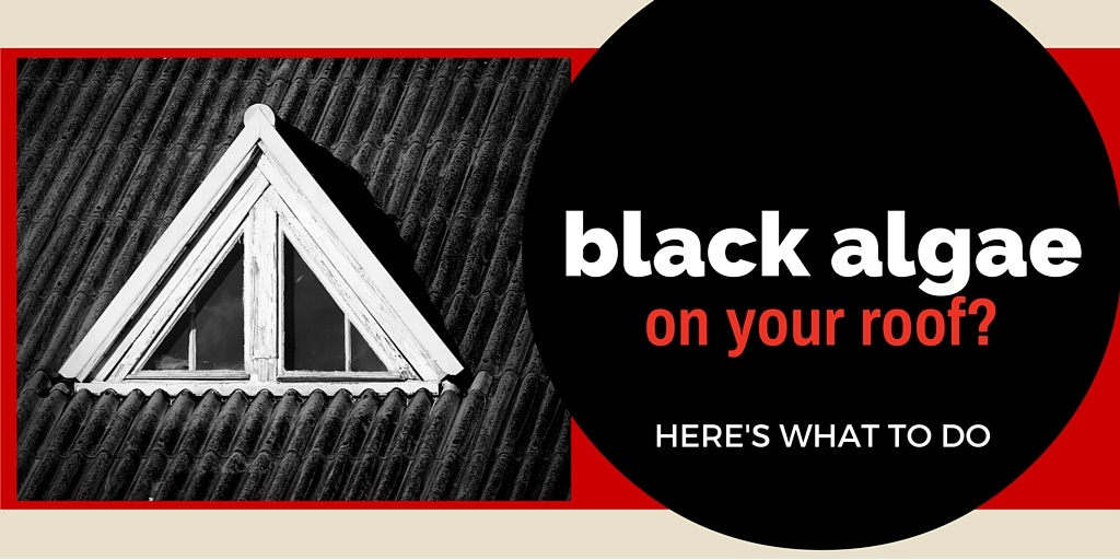Black Algae And Northern Virginia Roofing What You Need